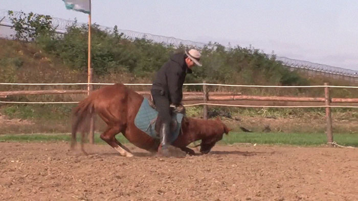 funny lazy horse play dead jingang 1 10 5dad7acb9537c 700