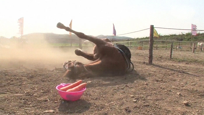 funny lazy horse play dead jingang 1 14 5dad7ad429fb8 700