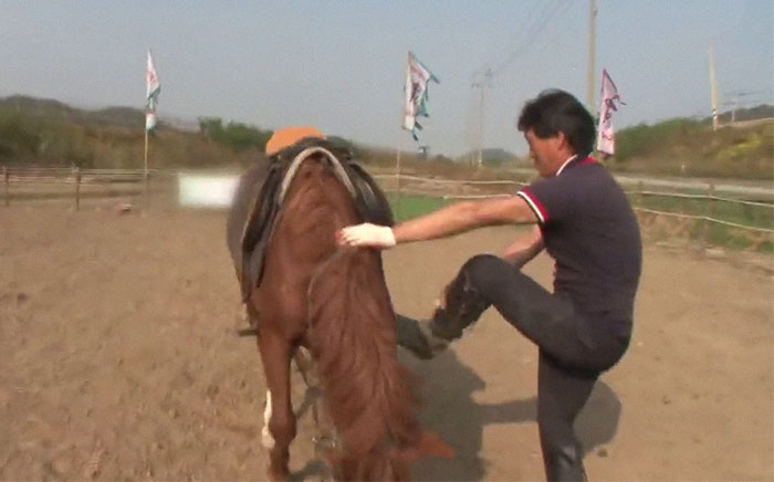funny lazy horse play dead jingang 1 19 5dad7add58c67 700
