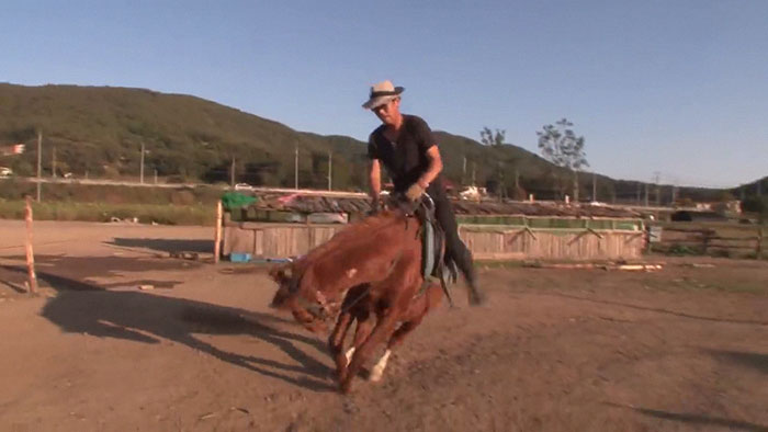 funny lazy horse play dead jingang 1 2 5dad7abf26e35 700