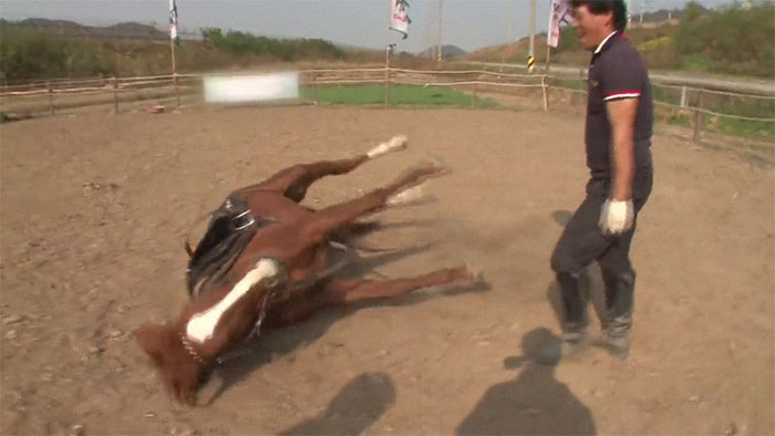 funny lazy horse play dead jingang 1 20 5dad7aded6d26 700