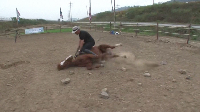 funny lazy horse play dead jingang 1 21 5dad7ae056f51 700