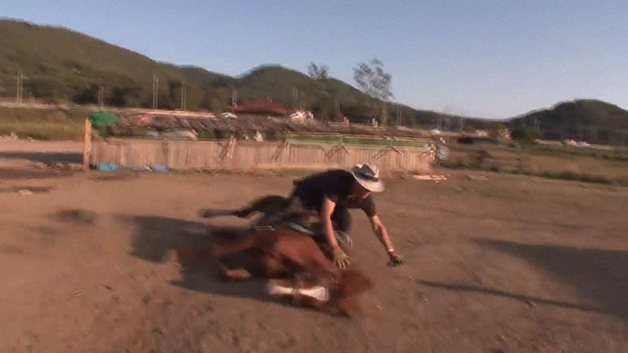 funny lazy horse play dead jingang 1 3 5dad7ac0b7207 700