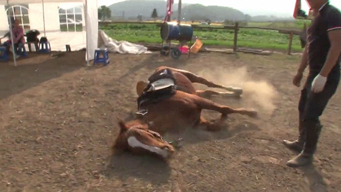 funny lazy horse play dead jingang 1 6 5dad7ac5867bb 700