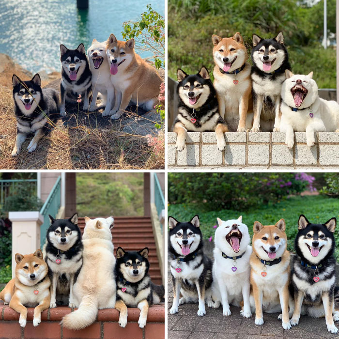 funny dogs pictures 40 5ed8e741d6199 700